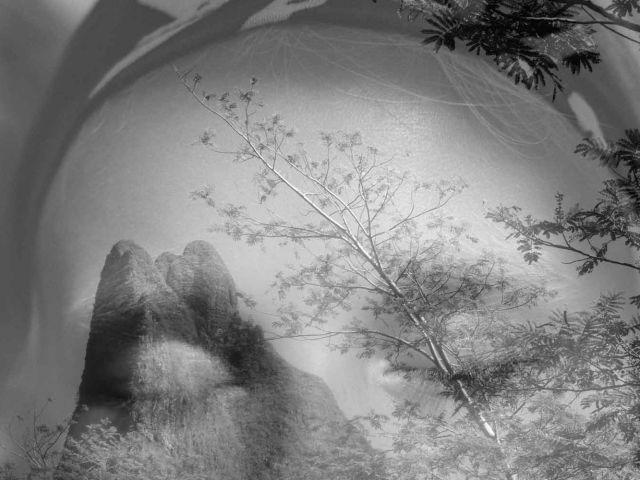 KWS_nettside_galleribilde_Tone_Telma-jungel-portrett-croppet